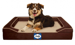 Sealy Dog Bed with Quad Layer Technology​